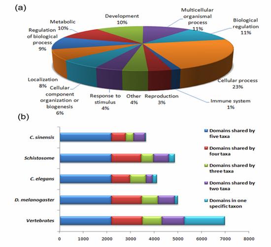 肝吸虫基因的功能分类图(a)和肝吸虫蛋白结构域特异性与其他物种比较