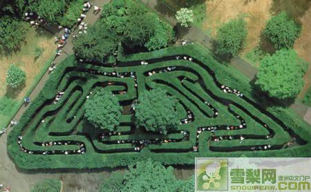 澳大利亚最古老的迷宫 阿什科姆