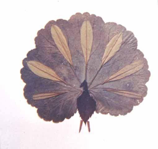 树叶贴画作品图片大全:树叶贴画作品孔雀集锦