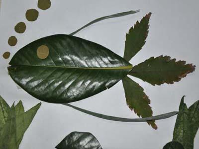 树叶贴画作品欣赏:鱼儿的诉说(内容 图片)